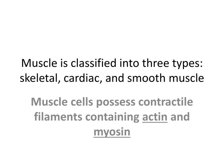 muscle is classified into three types skeletal cardiac and smooth muscle n.