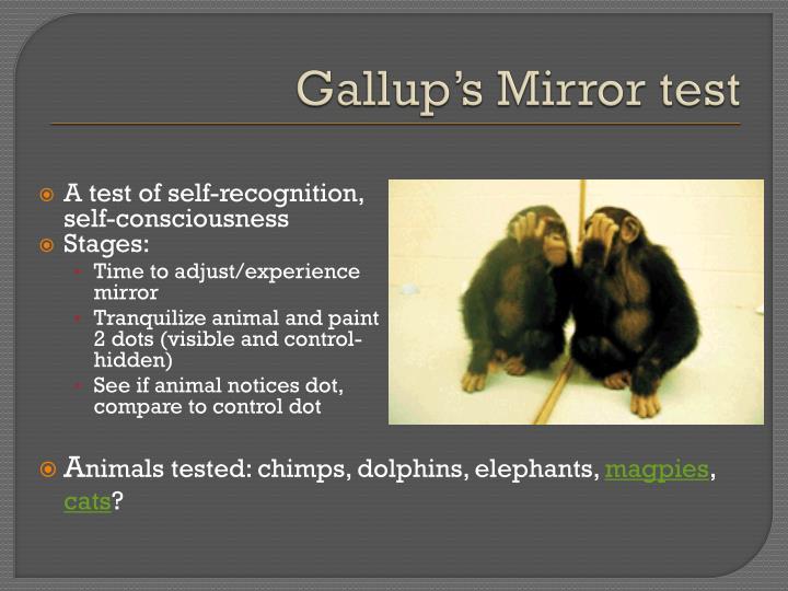 Gallup's Mirror test
