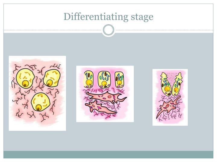 Differentiating stage