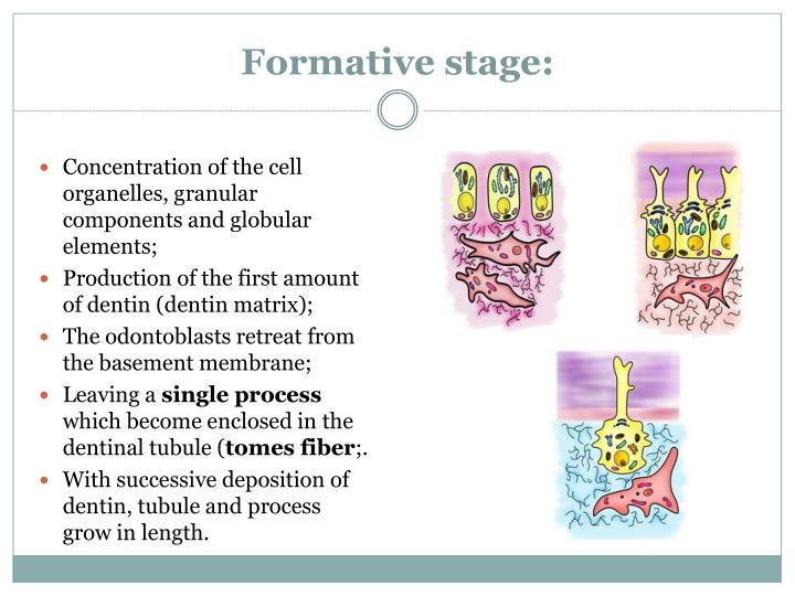Formative stage: