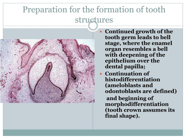 Preparation for the formation of tooth structures