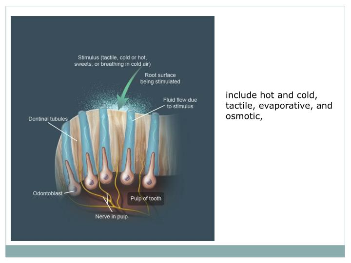 include hot and cold, tactile, evaporative, and osmotic,