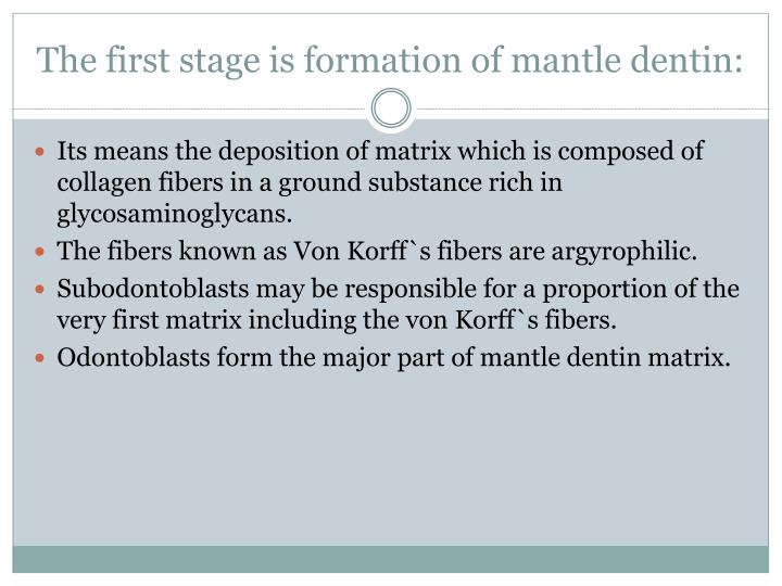 The first stage is formation of mantle dentin: