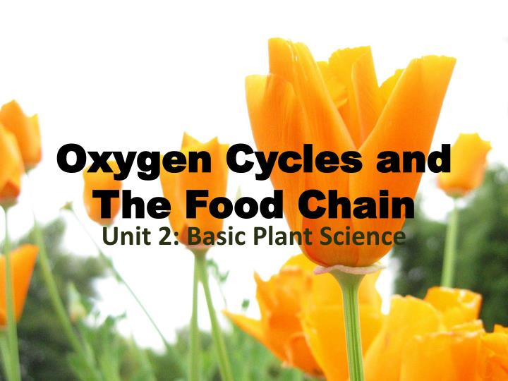 oxygen cycles and the food chain n.