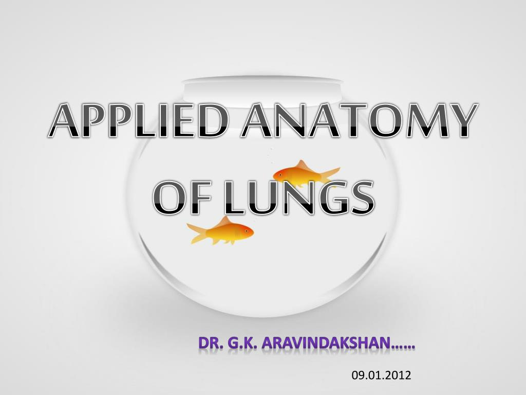PPT - APPLIED ANATOMY OF LUNGS PowerPoint Presentation - ID:2164055