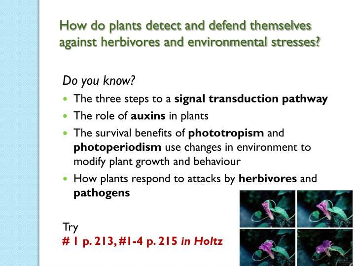 How do plants detect and defend themselves against herbivores and environmental stresses?