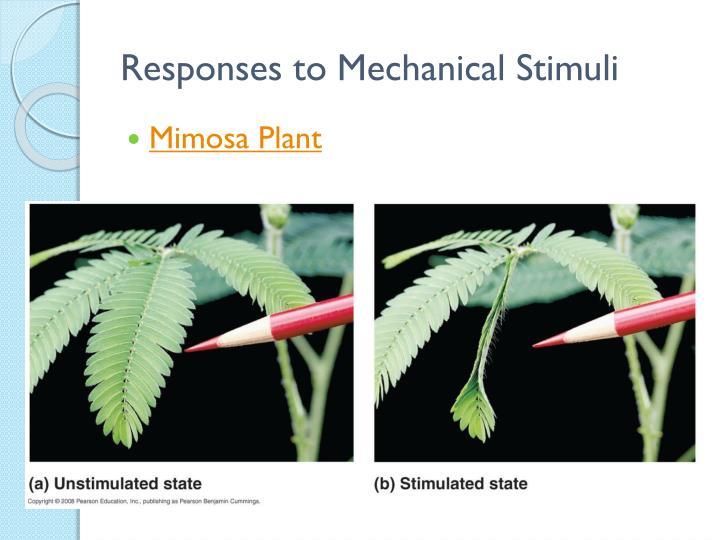 Responses to Mechanical Stimuli