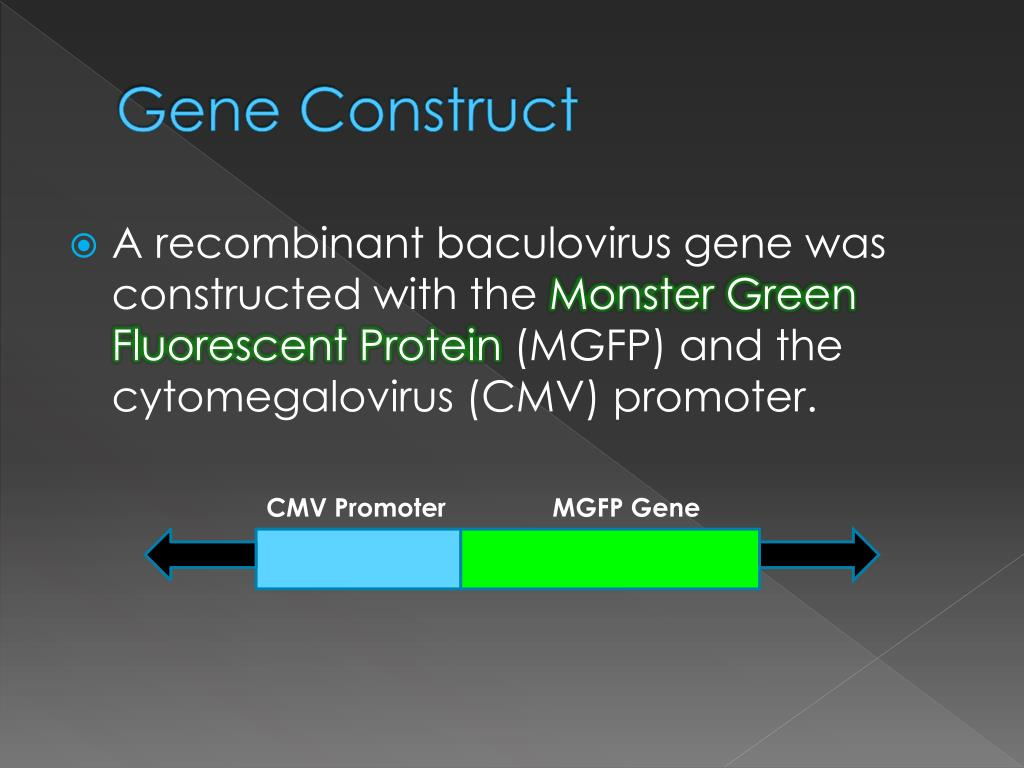 PPT - Recombinant Baculovirus : PowerPoint Presentation - ID