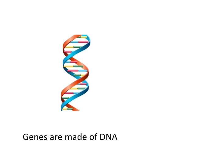 Genes are made of DNA