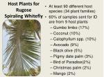 host plants for rugose spiraling whitefly