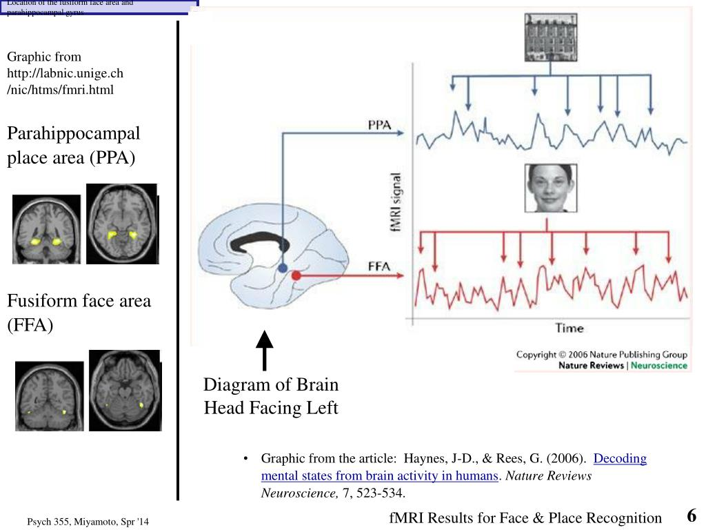 PPT - Localization of Function: Example of Face Perception ...