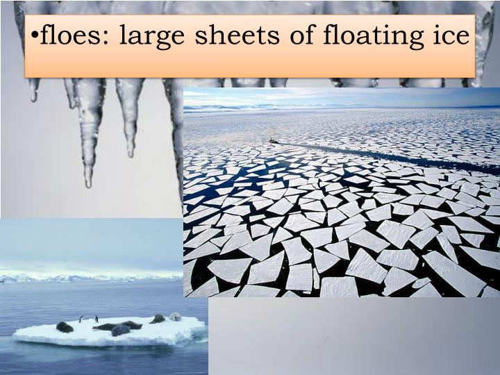 floes: large sheets of floating ice