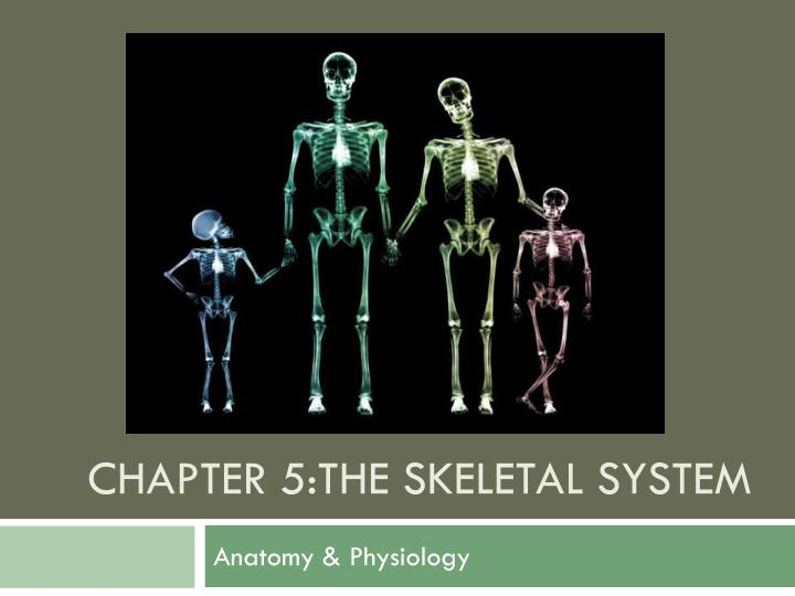 PPT - Chapter 5:The skeletal system PowerPoint Presentation - ID:2166248