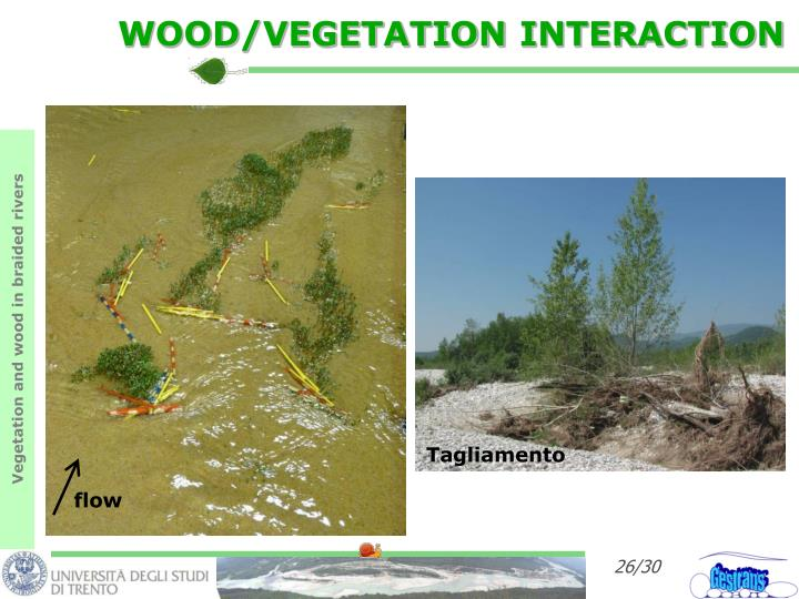 WOOD/VEGETATION