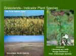 grasslands indicator plant species