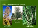 taiga indicator plant species1