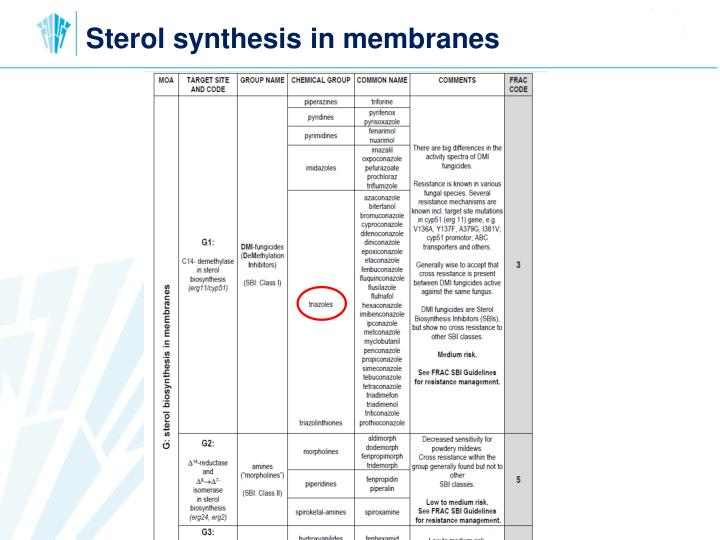 Sterol synthesis in membranes