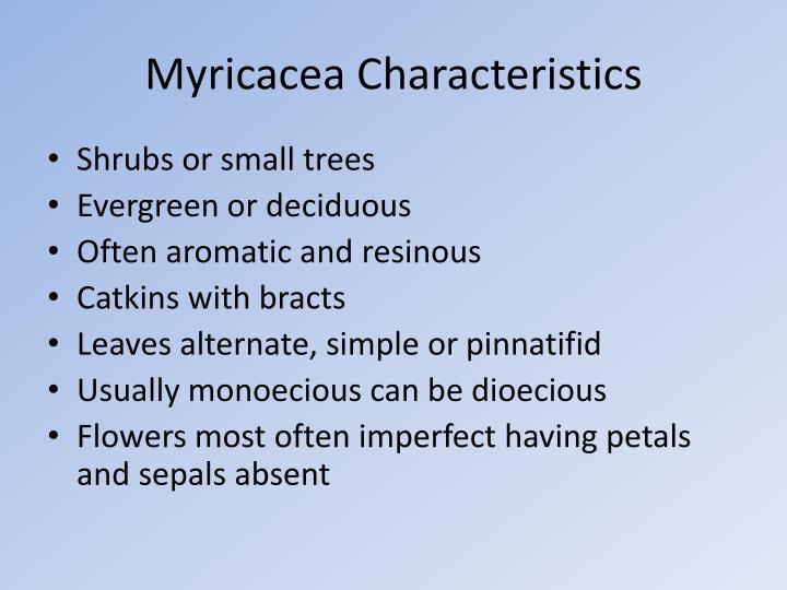 Myricacea characteristics