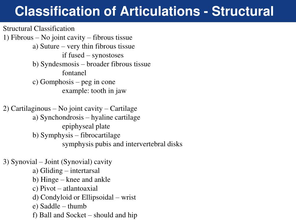 Ppt Articulations Powerpoint Presentation Free Download Id 2167770 Bones are joined together by connective tissue. ppt articulations powerpoint