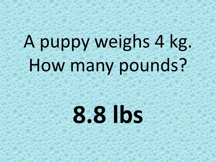 A puppy weighs 4 kg. How many pounds?