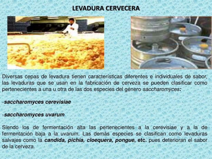 LEVADURA CERVECERA