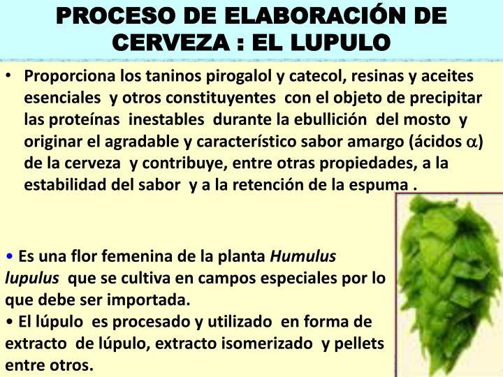 PROCESO DE ELABORACIÓN DE CERVEZA : EL LUPULO