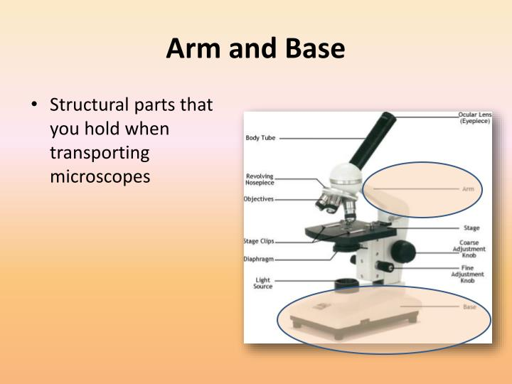 Arm and Base