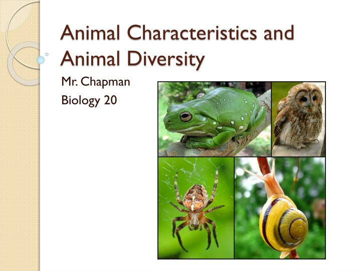 animal characteristics and animal diversity n.