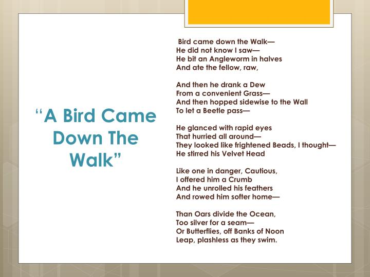 a bird came down the walk emily dickinson analysis
