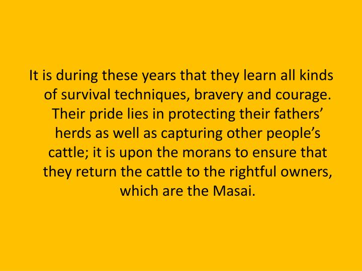 It is during these years that they learn all kinds of survival techniques, bravery and courage. Their pride lies in protecting their fathers' herds as well as capturing other people's cattle; it is upon the morans to ensure that they return the cattle to the rightful owners, which are the Masai.
