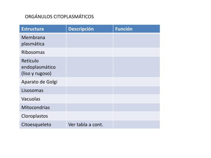 ORGÁNULOS CITOPLASMÁTICOS