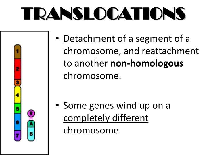 TRANSLOCATIONS