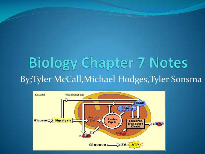 biology 1 notes As biology unit 1 page 3 hgs biology a-level notes ncm/7/11 heart heart structure and function the gross structure of the human heart and its associated blood vessels in.