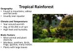 tropical rainforest1