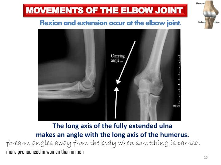MOVEMENTS OF THE ELBOW
