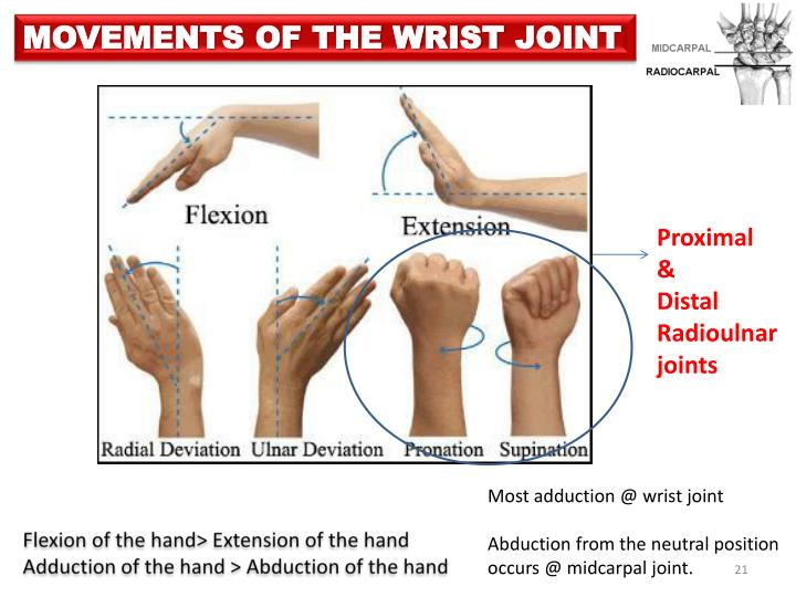 MOVEMENTS OF THE WRIST