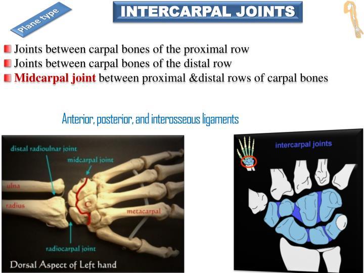 INTERCARPAL JOINTS