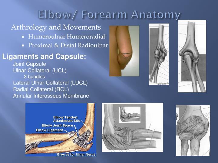 Ppt Pathomechanics Of Elbow Powerpoint Presentation Id2172168