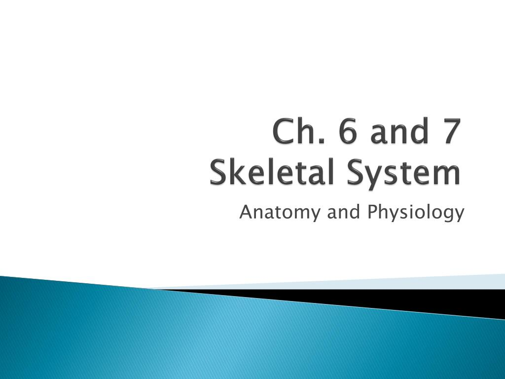 PPT - Ch. 6 and 7 Skeletal System PowerPoint Presentation - ID:2172170