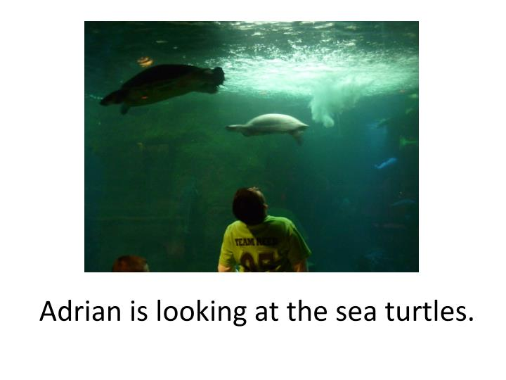 Adrian is looking at the sea turtles.