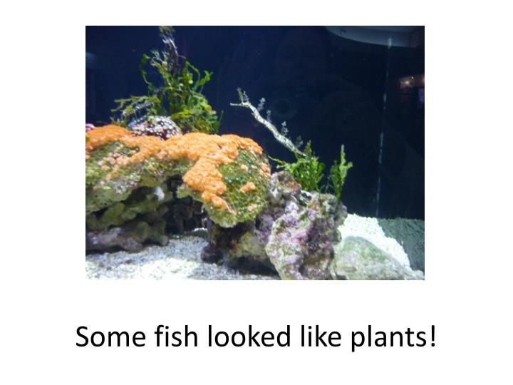 Some fish looked like plants!
