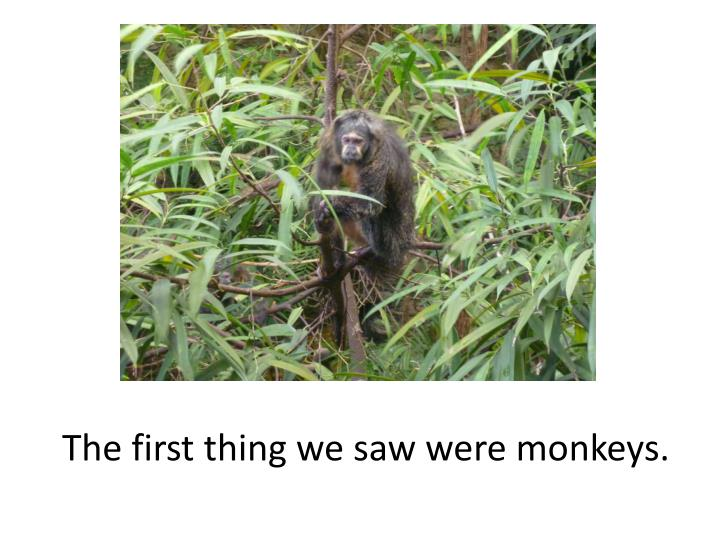 The first thing we saw were monkeys