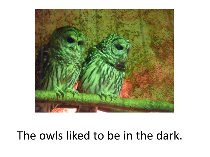 The owls liked to be in the dark.