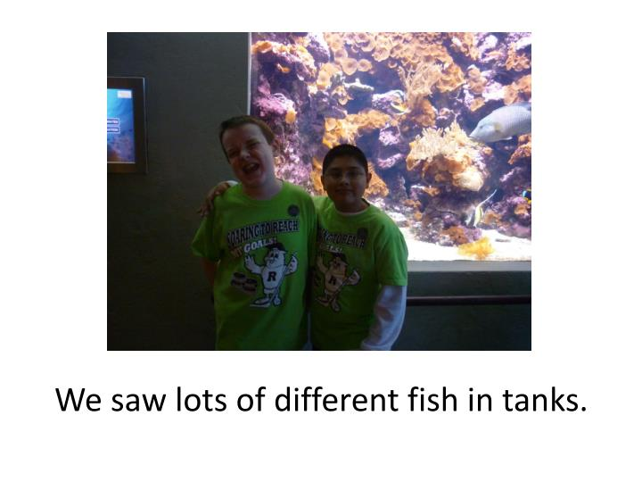 We saw lots of different fish in tanks.