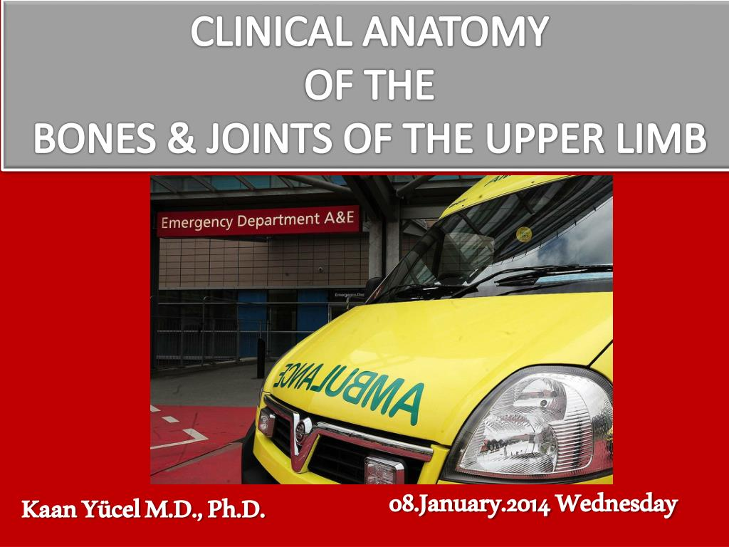 PPT - CLINICAL ANATOMY OF THE BONES & JOINTS OF THE UPPER LIMB ...