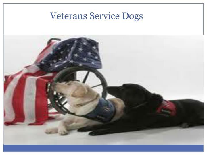 Veterans Service Dogs