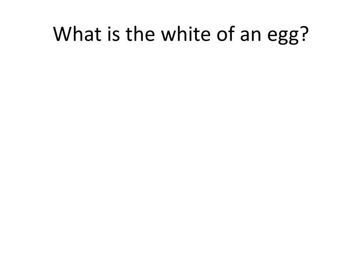 What is the white of an egg?