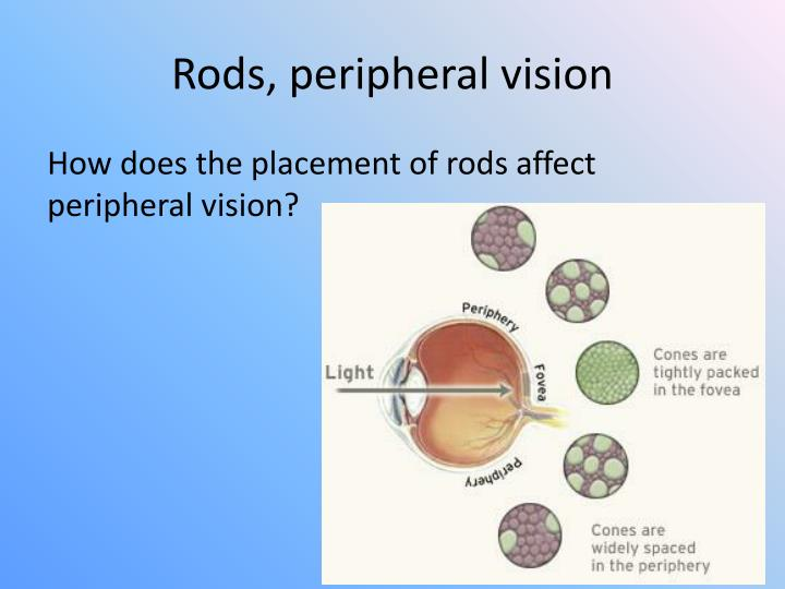 Rods, peripheral