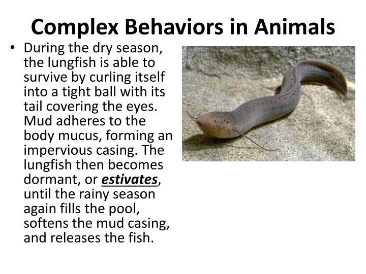 Complex Behaviors in Animals