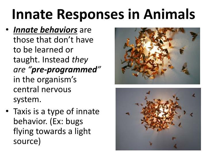 Innate Responses in Animals